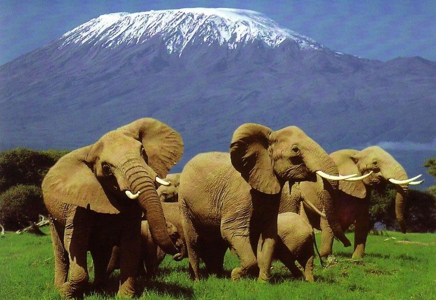 beauty-of-kenya